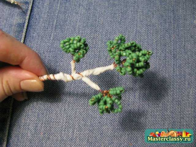 макушка дерева бонсай.