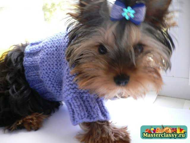 Осуществить вязание для собак схемы
