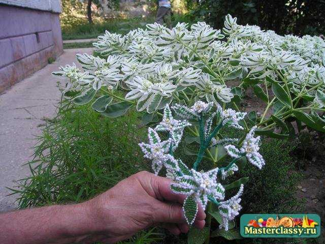 """...созданием этого прекрасного цветка  """"Невеста """" Так как ветка этого цветка была собрана ранее и пошаговых фото..."""