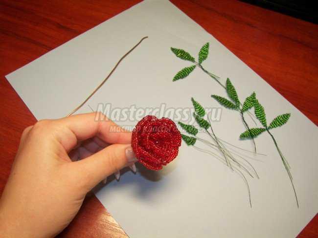белая лилия из бисера СХЕМЫ. рябина из бисера. из бисера для начинающих. объемный цветок из бисера на леске...