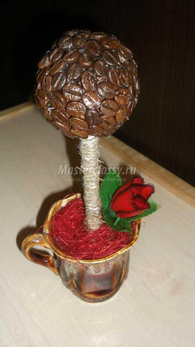 Кофейное дерево сделано своими руками фото 613