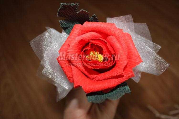 Английские розы из конфет и гофрированной бумаги своими руками мастер класс 73