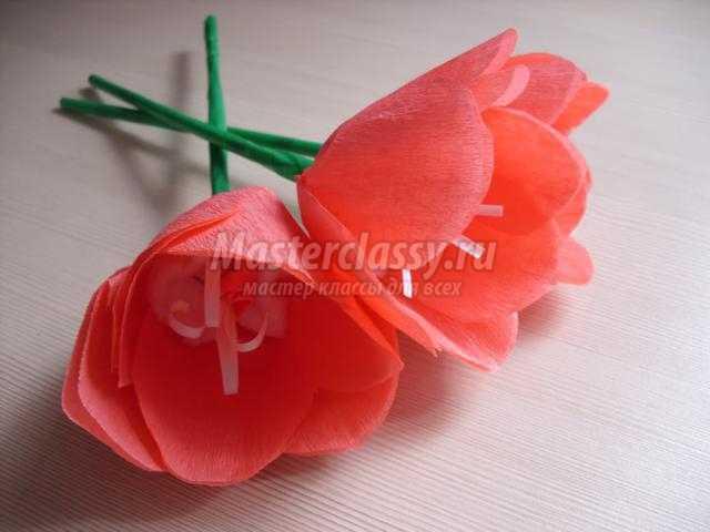 Тюльпан из креповой бумаги своими руками пошаговое
