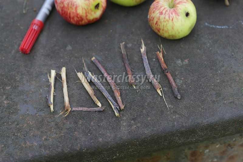 Поделка из свежего яблока 872