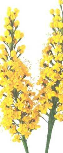 Желтые длинные цветы