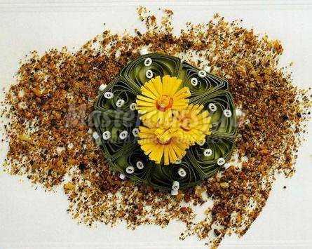 Цветы из бумаги. Кактус в технике квиллинг