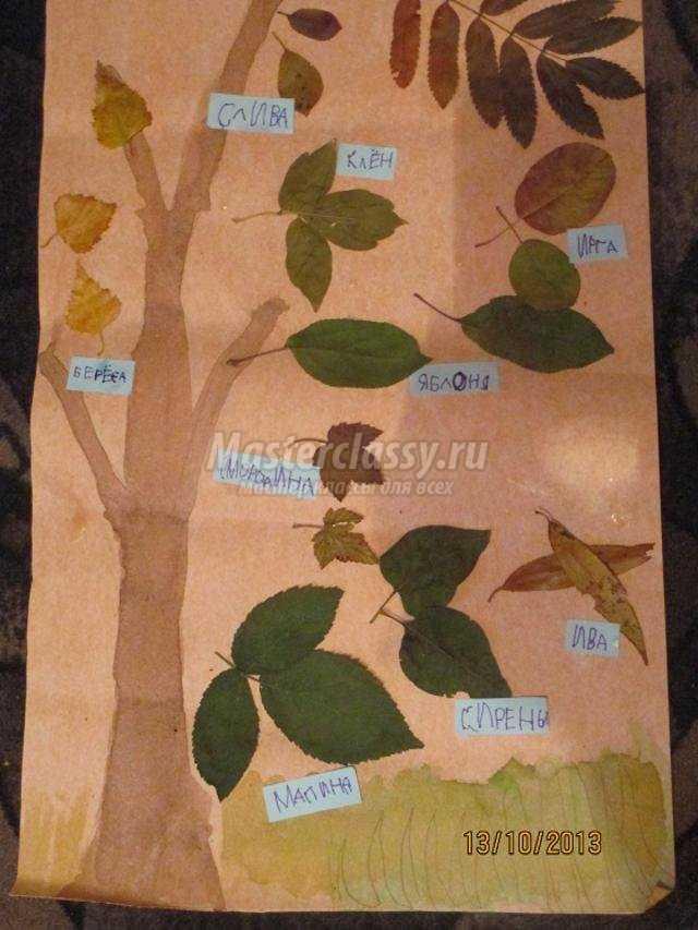 Гербарий своими руками Осенний листопад. Мастер-класс с 25