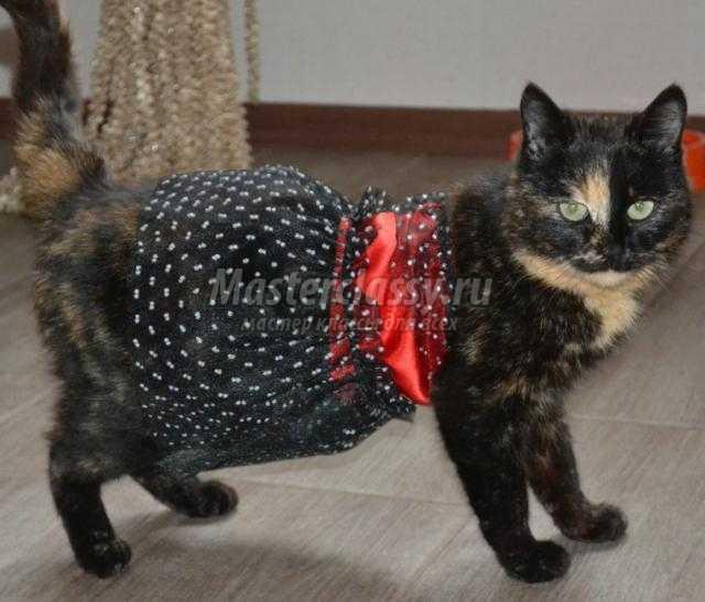 Платье на кошку сшить
