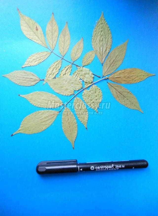 осенняя композиция из листьев и пластилина. Гроздь рябины