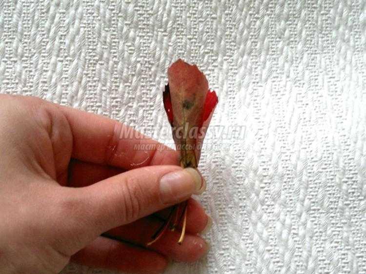 красивая роза из осенних листьев