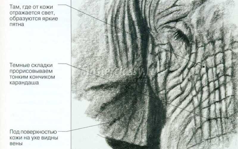 изображение кожи при рисовании