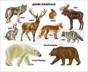Конспект НОД в старшей группе. Знакомство с животными