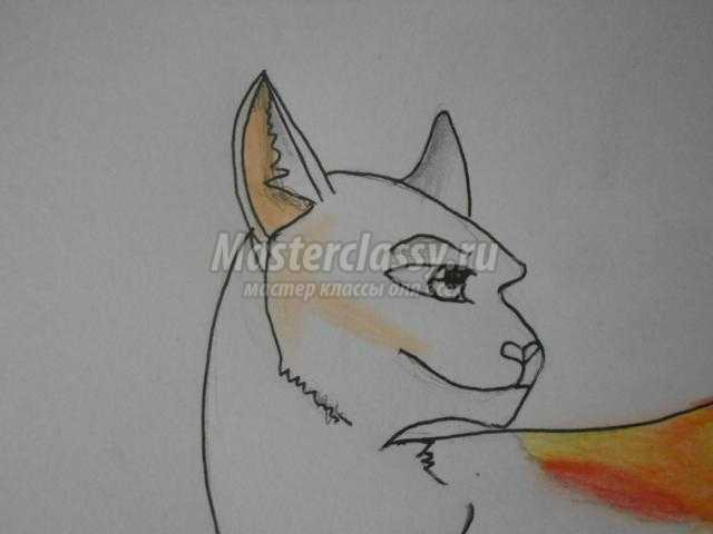 рисование кошки цветными карандашами
