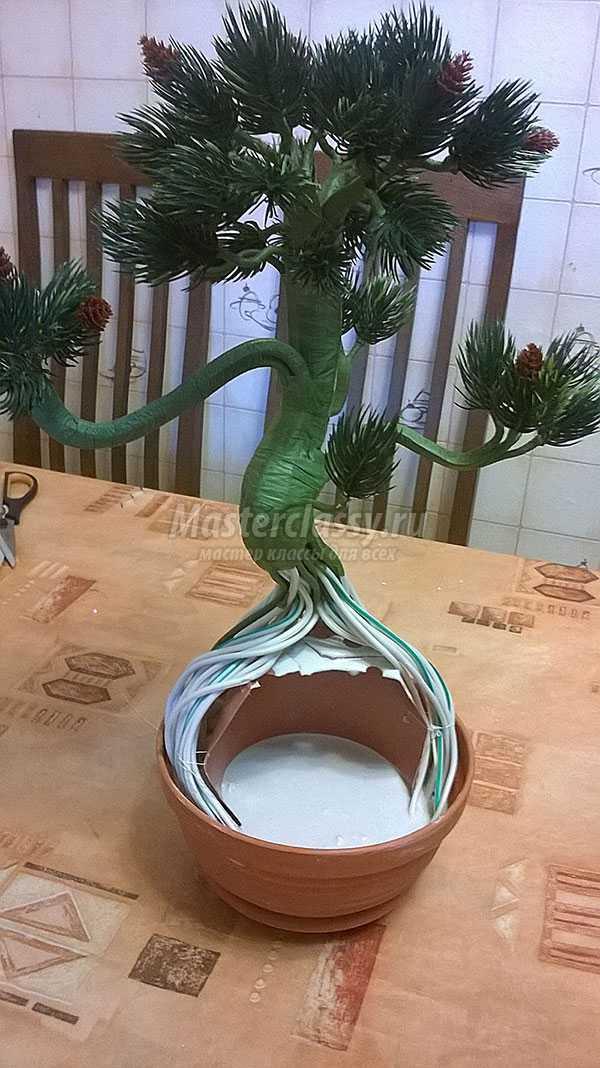 дерево бонсай пошаговые фото