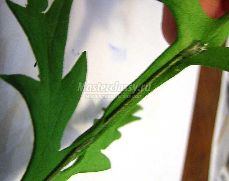 выкройка анемона из фоамирана