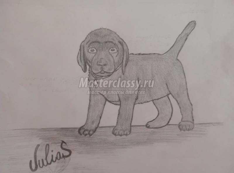 как нарисовать собаку карандашом для начинающих