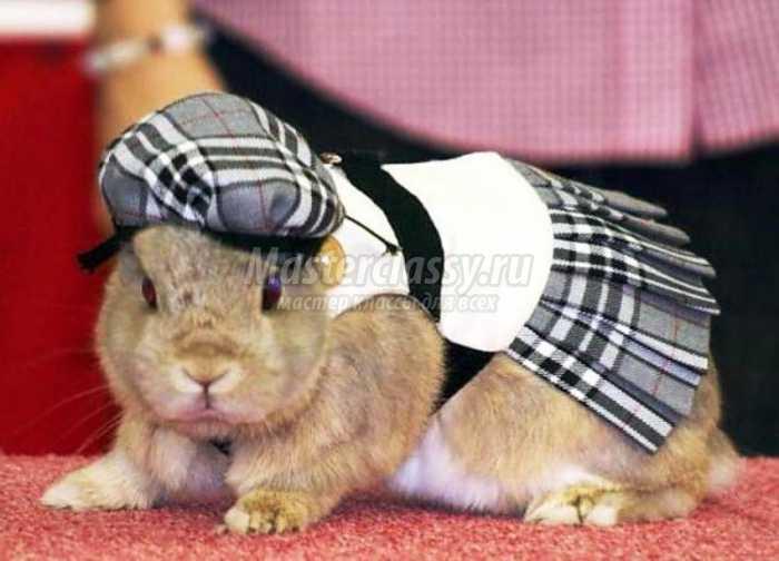 Одежда для кроликов своими руками