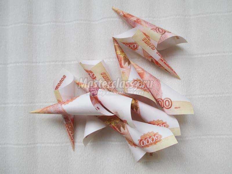 денежный цветок фото