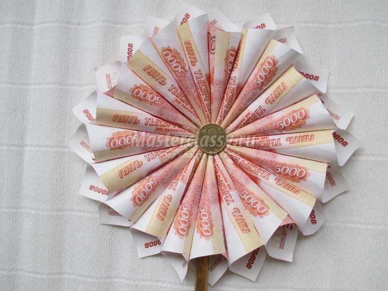 топиарий денежный цветок