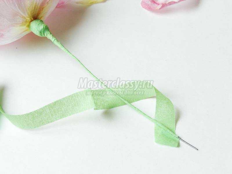 цветы шиповника фото
