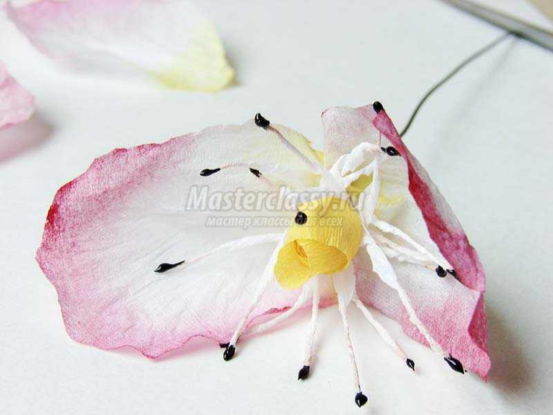 цветы шиповника