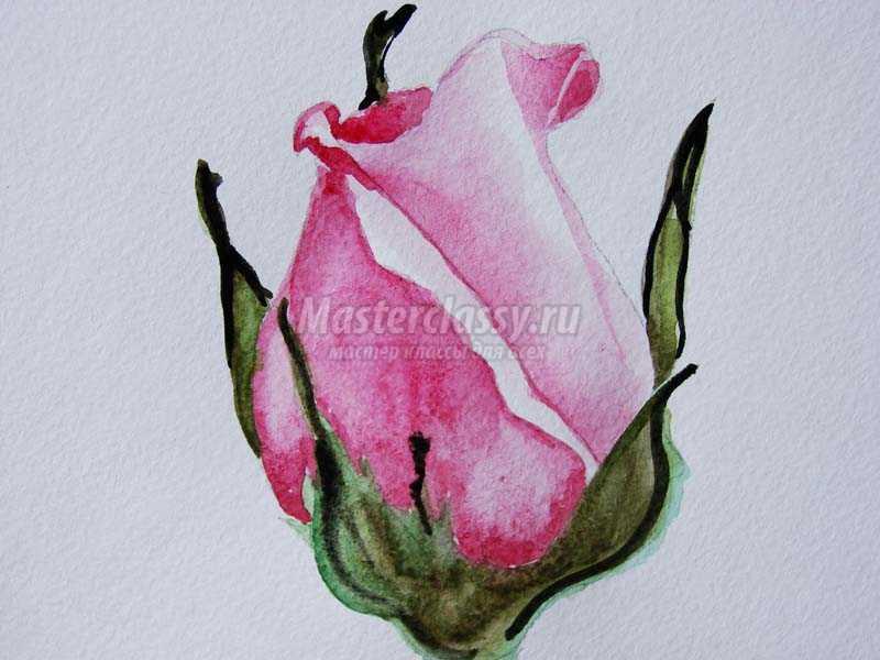 как нарисовать розу красками акварель