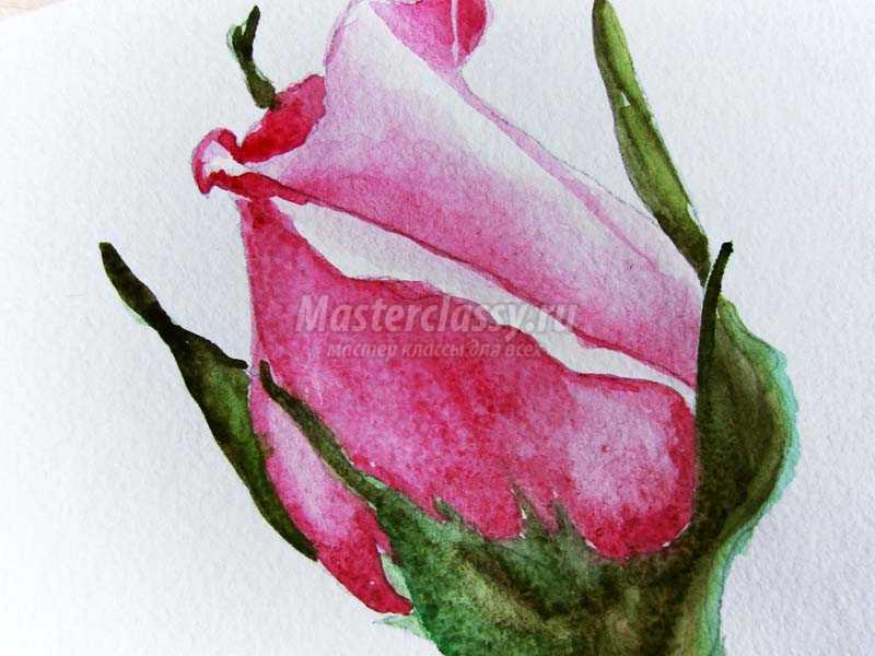 Как нарисовать красками розу
