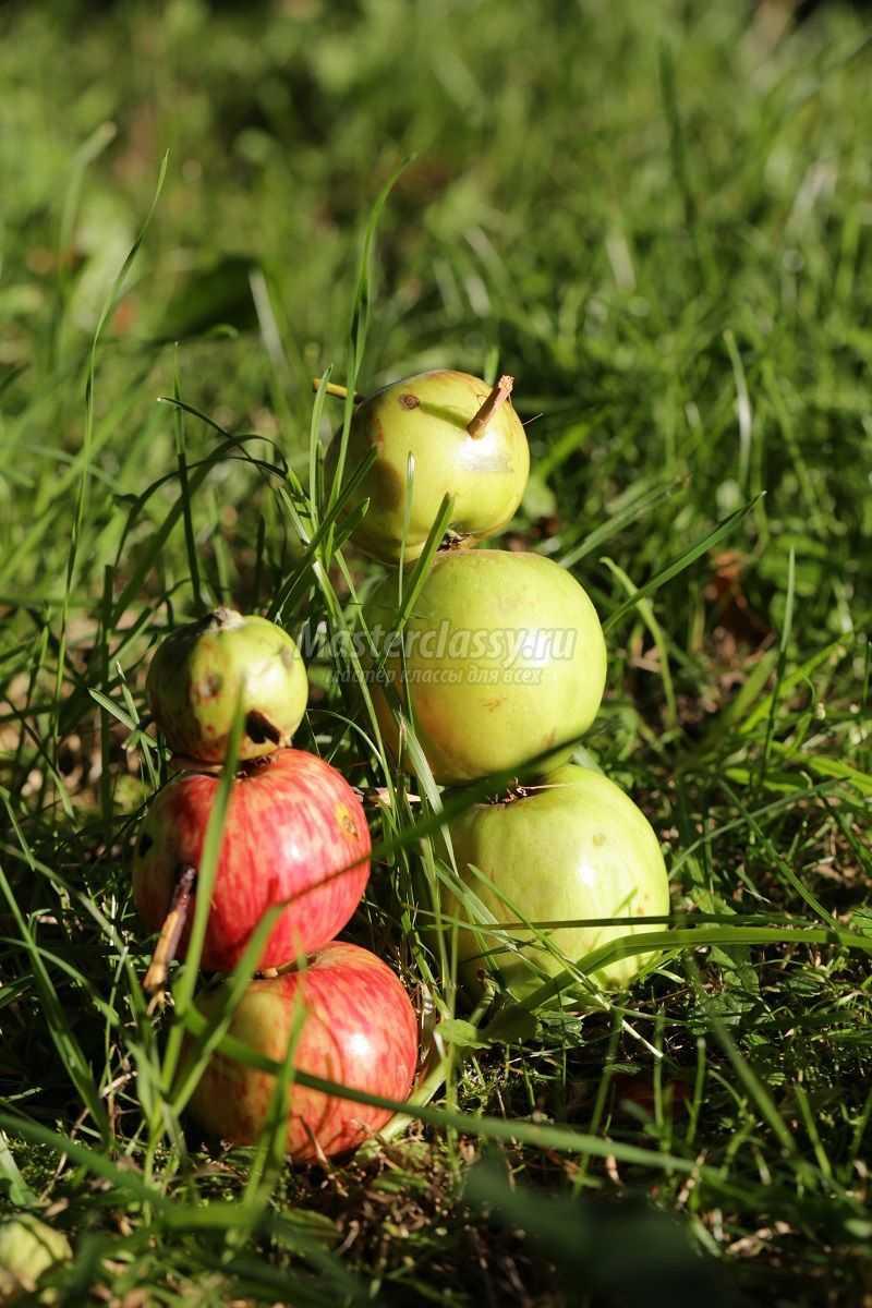 как сделать поделку из яблока
