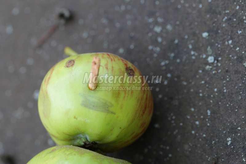 поделки из яблок