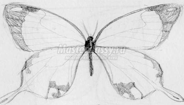 Как нарисовать бабочку? Пошаговый мастер-класс