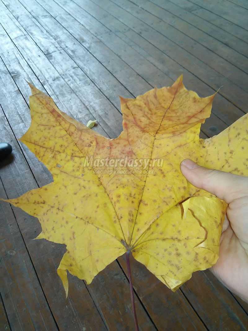 осенний букет листья