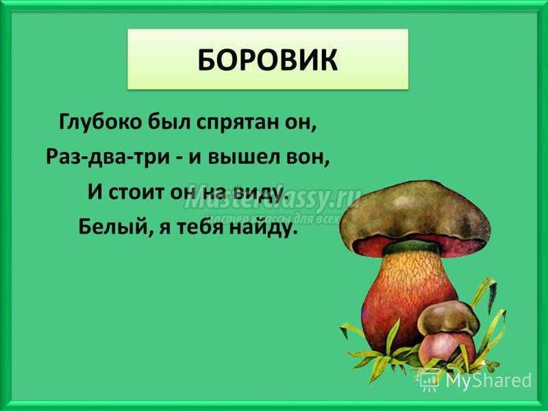 грибы загадки с картинками и ответами спецоперации