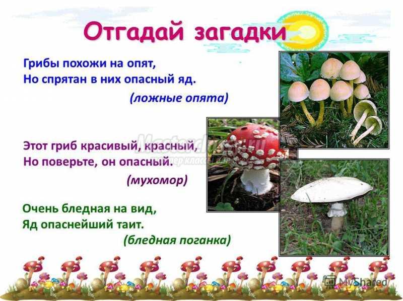 сорок грибы загадки с картинками и ответами будет полезна как