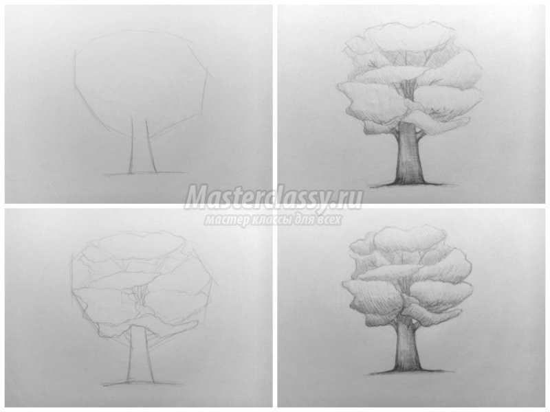 1540407623_collage6 Как нарисовать дерево